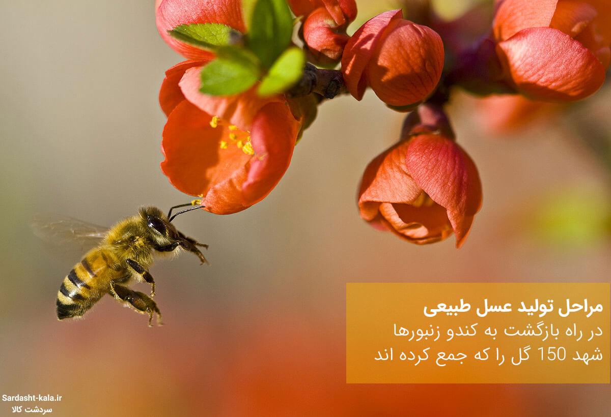 مراحل تولید عسل